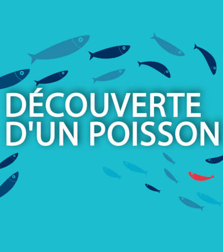 Fish discovery